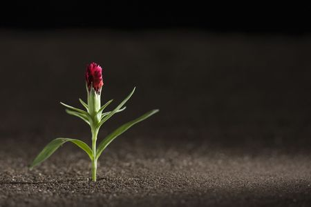 A young green plant growing out of brown soil. Stock Photo - 7631537