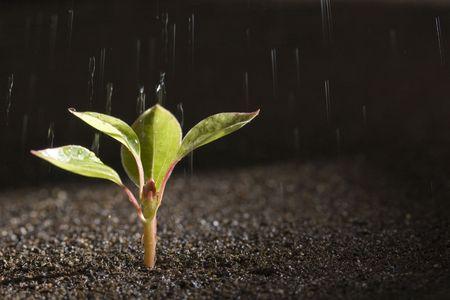 Een jonge, groene plant met water op het groeiende uit bruin bodem. Stockfoto