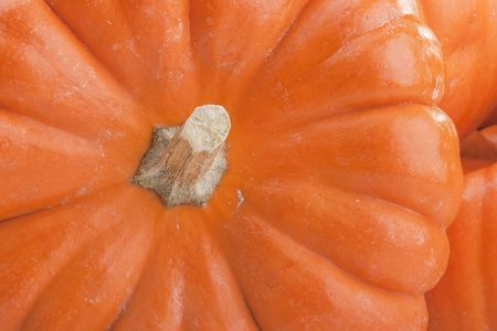 Small orange pumpkins symbolising autumn holidays and used in decorative works. photo