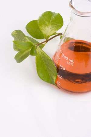 Green leaves next to an erlenmeyer flask with a red liquid in it.