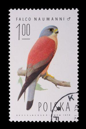 Poland - CIRCA 1974: A stamp is printed in Poland, Lesser Kestrel, let out CIRCA in 1974. Stok Fotoğraf