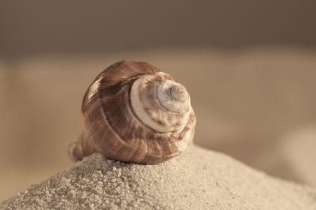 모래, 스튜디오에서 촬영에 빈 cockleshell입니다.