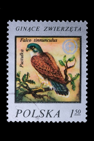 Polonia - CIRCA 1978: Un francobollo è stato stampato in Polonia, Kestrel europeo, lasciata fuori CIRCA nel 1978. Archivio Fotografico - 8277781