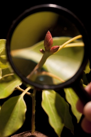 The young shoots of trees under a magnifying glass.