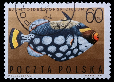 balistoides conspicillum: Poland - CIRCA 1967: A stamp is printed in Poland, Clown triggerfish, CIRCA in 1967.