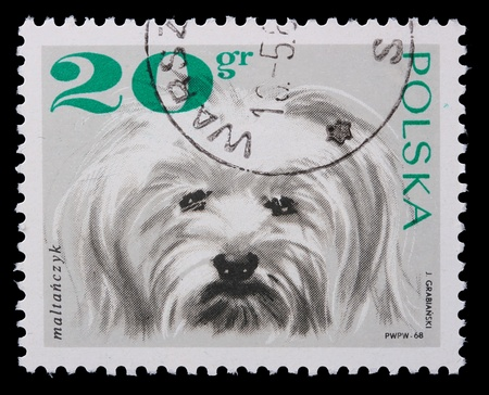 lapdog: Poland - CIRCA 1968: A stamp is printed in Poland, lap-dog, CIRCA in 1968. Stock Photo