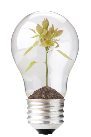 soil conservation: Green seedling in a light bulb isolated on a white background.