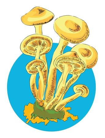 Honey in a series of edible mushrooms.