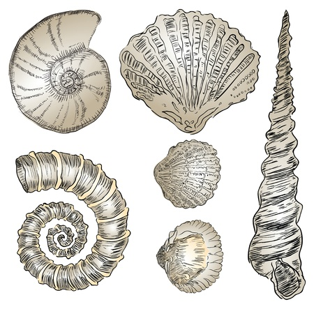 fossil: illustration of prehistoric life forms. Drawings are made by hand. Illustration