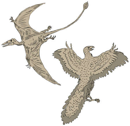 pterodactyl: illustration of a pterodactyl and ancient birds.