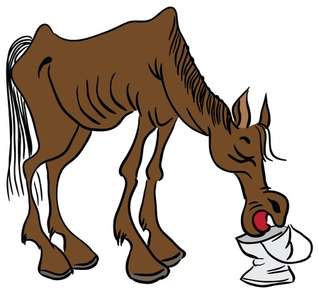 Skinny cowboy horse drinks water from a bucket. Vector illustration. 일러스트