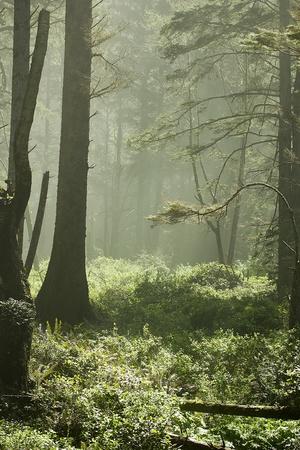 나무를 통해 빛나는 태양의 광선의 경치를 볼.
