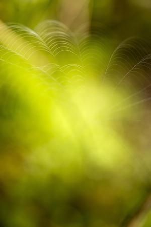 Abstracte groene onduidelijk beeldachtergrond voor tekst of ontwerp. Stockfoto