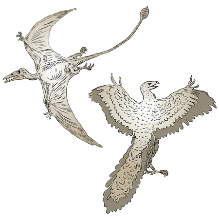 pterodactyl: Vector illustration of a pterodactyl and ancient birds. Illustration