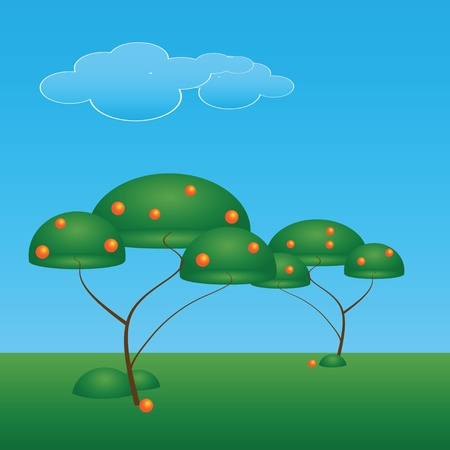 Orange trees with fruits, ornamental planting. Vector illustration. Stock Vector - 13552222