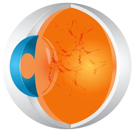 De structuur van het menselijk oog in doorsnede. Vector illustratie.