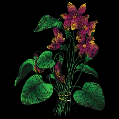 Figure violets on a black background. Vector illustration. Stock Vector - 13903546