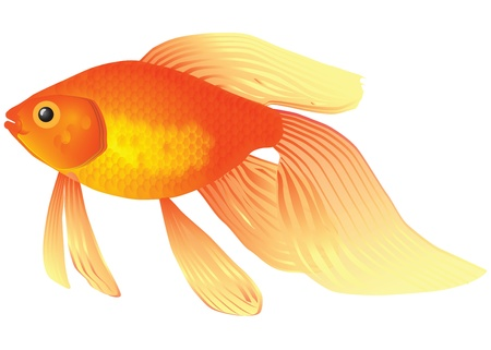 Goldfish voor de inhoud van akvariume.Illyustratsiya Stock Illustratie