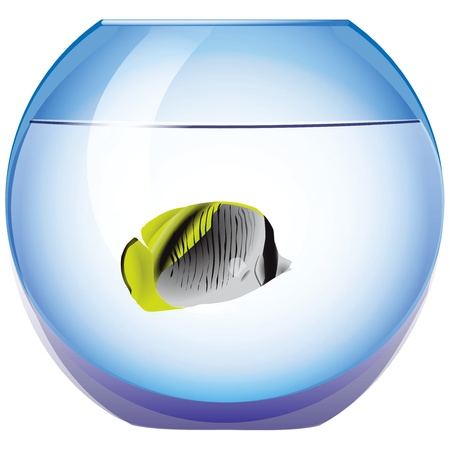 fish tank: Exotic fish in the tank round.
