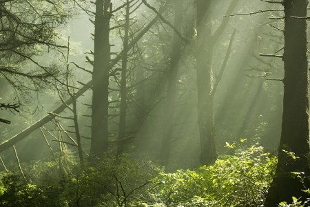 nautral: Scenic view of rays of sun beaming through the trees. Stock Photo