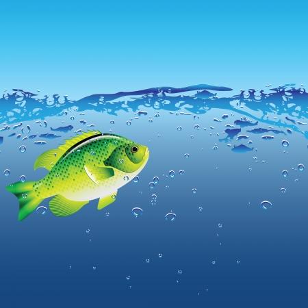 Fish in their natural habitat Stock Vector - 15039597