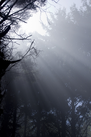 Scenic view of rays of sun beaming through the trees. Stok Fotoğraf