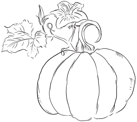 The fruit of the pumpkin with leaves and blossoms ovary.  Vector