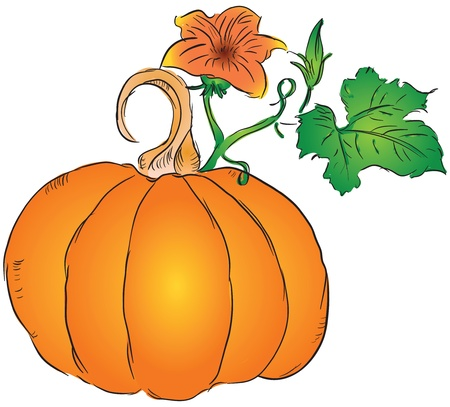 The fruit of the pumpkin with leaves and blossoms ovary