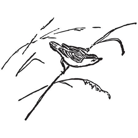 Bird on a cane. Flora and fauna. Vector illustration. Stock Vector - 17688522