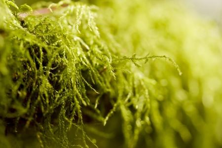 조경 내야에 사용되는 식물. 조경.