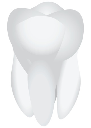 A healthy human tooth. The subject of dental treatment. Vector illustration.