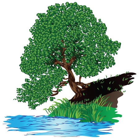 Tree with dense green foliage of the pool. Vector illustration.