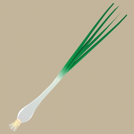 Young green onions as a flavoring condiment. Vector illustration.