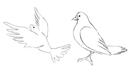 marrying: Dove, drawing made by hand. Two options. Vector illustration.