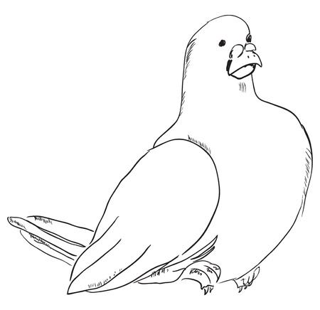 marrying: Dove Vector illustration.