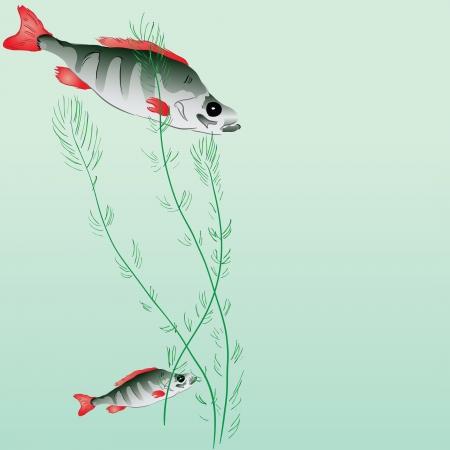 Perch in a pond with algae. illustration.