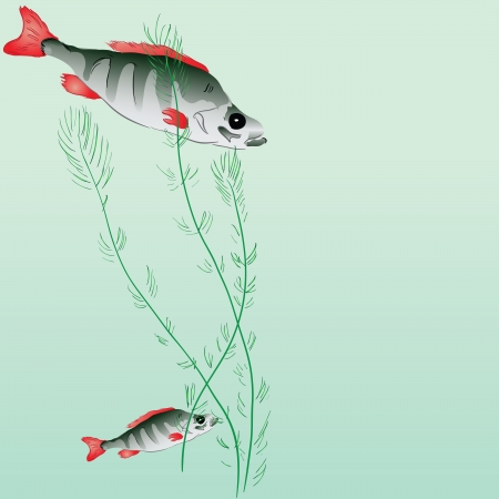 Perch in a pond with algae. illustration. Vector