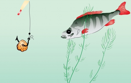 single fin: Fishing perch on the baited hook. Vector illustration.