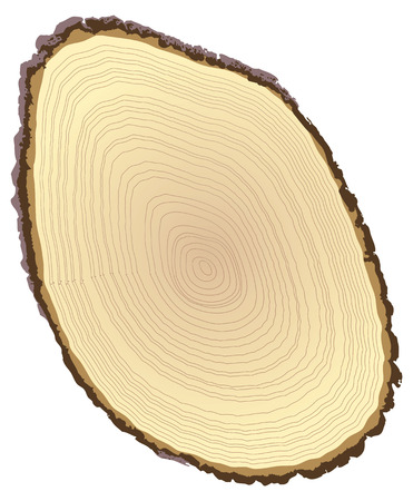 Cross section of tree stump isolated on white background, vector illustration Vector