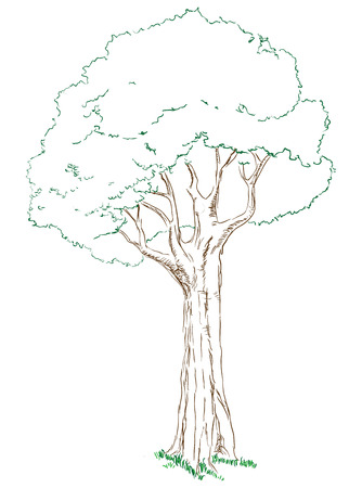 dense: Big green tree with a dense crown. Vector drawn by hand.