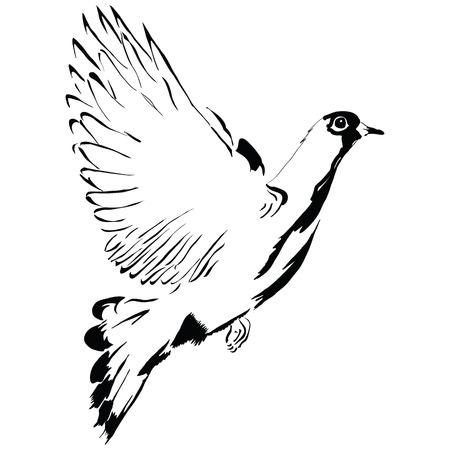 marrying: Flying dove cartoon drawing made %u200B%u200Bby hand.