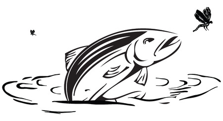 lily pad: Salmon hunts insects jumping out of the water  illustration  Illustration