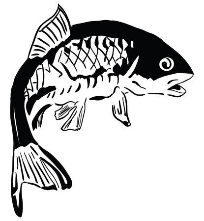 pez carpa: La carpa común - las especies de peces que habitan en agua dulce. Ilustración del vector. Vectores