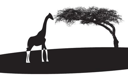 サバンナのキリンとバオバブのシンボルです。ベクトル イラスト。