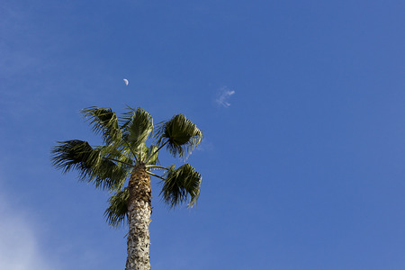 copysapce: Palm tree on sky day, the moon over the palm.