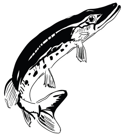 Pike - predator inhabits freshwater environments. Vector
