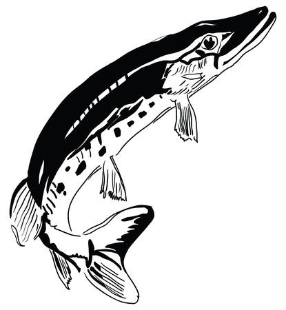 Pike - predator inhabits freshwater environments.