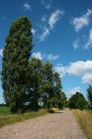 rough road: The road from rough stones with poplars along the road.