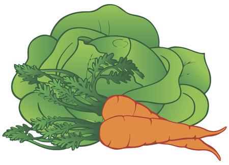 新鮮な野菜のキャベツとニンジン。ベクトルの図。