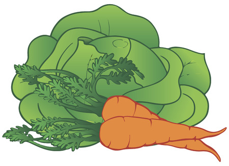 Fresh vegetables cabbage and carrots. Vector illustration. Ilustrace